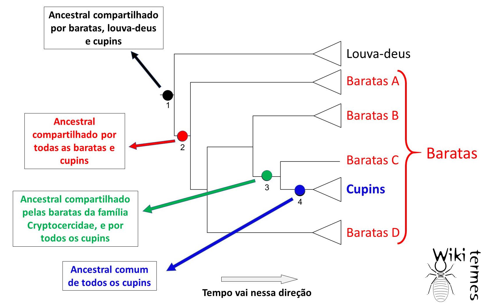 Filogenia.jpg