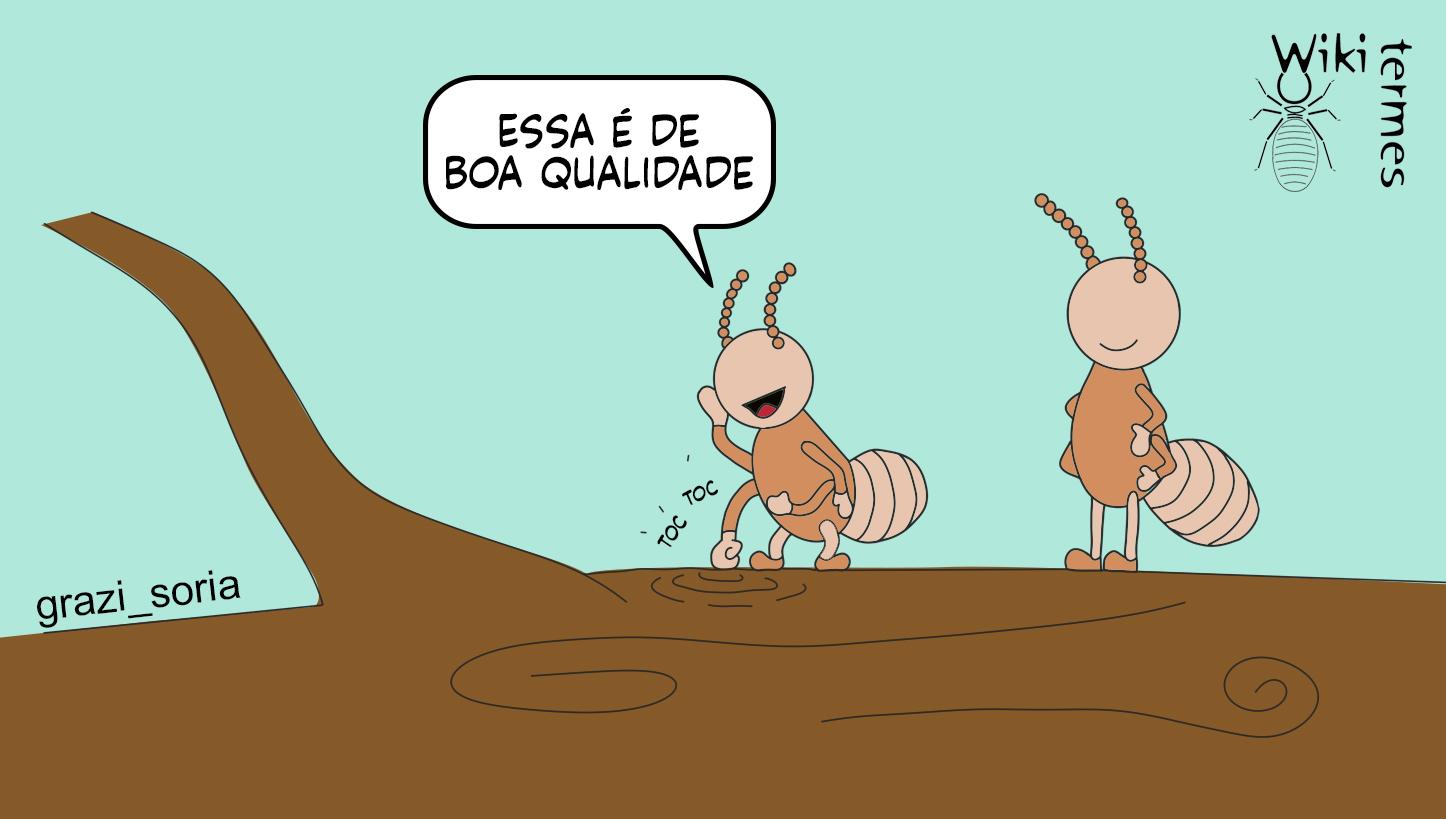 CupimMadeira-2.jpg