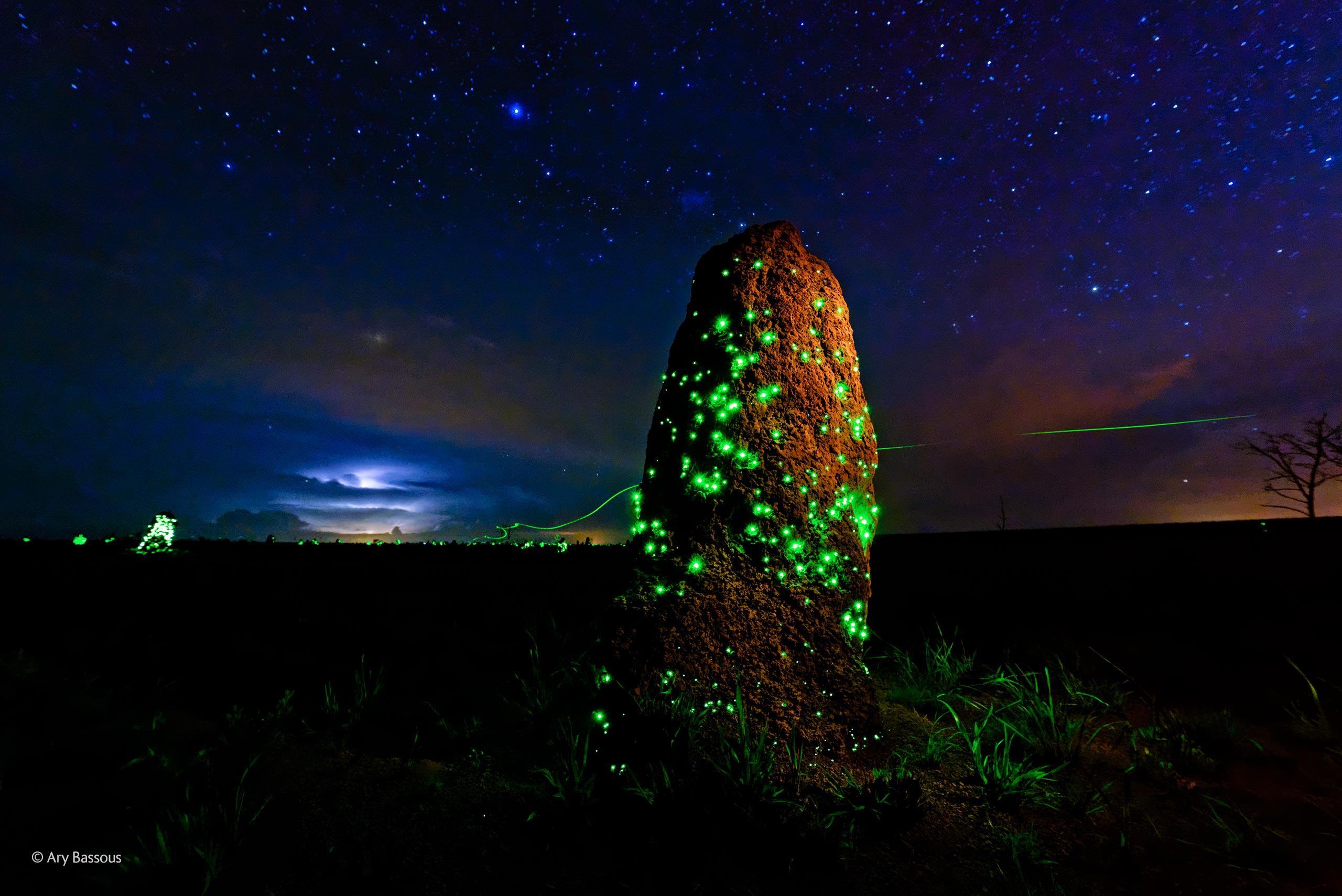 Bioluminescencia.jpg